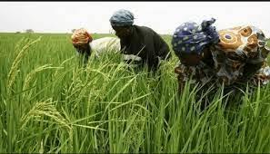 Révolution verte de l'Afrique : l'acte de haute portée posée par la Banque africaine de développement