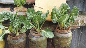 Kenya : faire pousser ses légumes dans du plastique